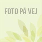 Asparges, 'Violetta' (røde) (1 bundt á 10 stk.)